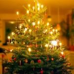 Weihnachtsbaum - Künstlich oder echt?