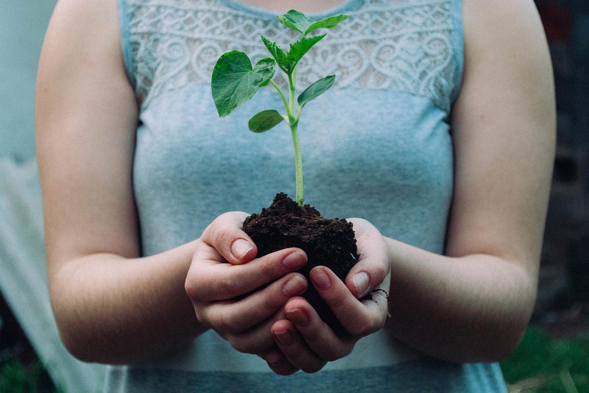 Person mit blauem Oberteil, die eine kleine Pflanze in beiden Händen vor dem Körper hält