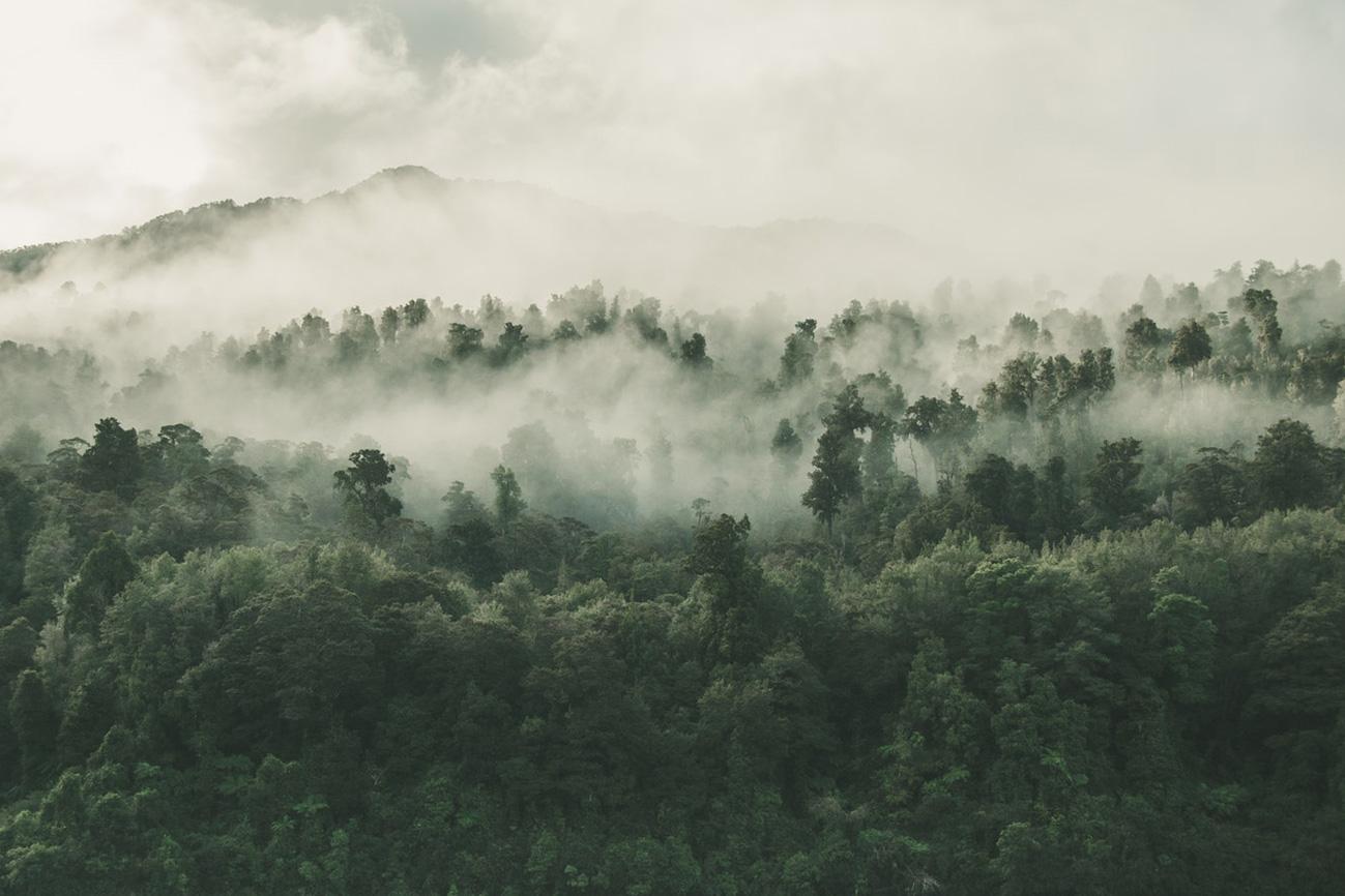nebliger Regenwald